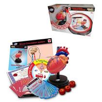 Kit Científico Corazón Humano 33x12x20cm 29 Pzas 7+ Ideas