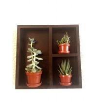 Cuadro Con Macetas Y Plantas Naturales