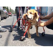 Silla 4 Puntos Carrito Rehabilitación Perro Car-can Mediano