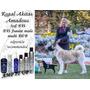 Akita Pure Paws Shampoo Para Cachorros O Adultos De Show