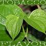 Saborizante Flavor West Stag Leaf Tobacco 30ml