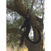 Animales Disecados 100% Artificiales Mono Araña