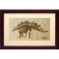Dinosaurio Stegosaurus Esqueleto Enmarcado Fosil