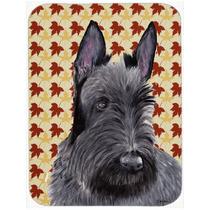 Scottish Terrier Retrato Caída Deja La Tarjeta De Corte De