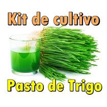 Kit Para Cultivar Pasto De Trigo Wheat Grass Hidroponia Jugo