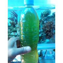 Fitoplancton Vivo Alimento Para Tus Corales