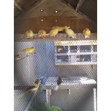Venta De Aves Exoticas