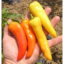 20 Semillas Chile Sweet Banana Pepper Plantas Pica Huerto