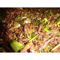 Chapulines Oaxaqueños 100 Gramos