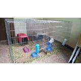 Jaula Corral Para Conejos Con Techo 60cm Alto 1.2mt Largo