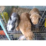 Conejos Para Cria, Alimentación Y Domesticación,