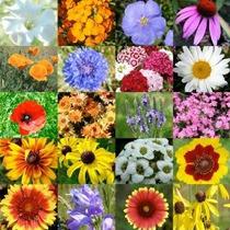 2000 Semillas Wildflower Mezcla Tierras Secas (20 Especies