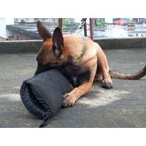 Manga Para Entrenar Perros