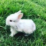Hermosos Conejos Japonés