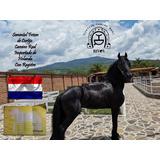 Maquila De Semental Frison Holandes Chip Registro Pasaporte