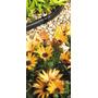 Manguera - Hozelock Conector Recto 4mm Jardín Accesorios