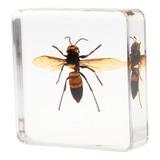 Juguete De Muestra De Insectos De Simulación De Resina