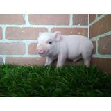 Minipig Cerditos Mini Pig Rosa/lunares