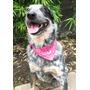 Paliacates Collar Para Perros Y Gatos Diferentes Tamaños