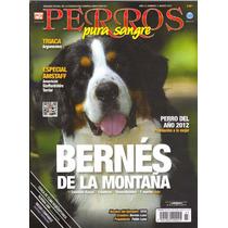 Revista Perros Pura Sangre Bernés De La Montaña Marzo 2013