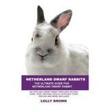 Conejos Enanos De Holanda: Cría, Compra, Cuidado, Costo,