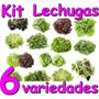 Kit Para Cultivar Lechugas Principiantes Hidroponia Organico