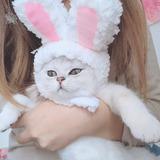 Peluca Disfraz Orejas De Conejo Para Gatos Perros Mini