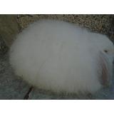 Hermosos Conejos Belier Angora