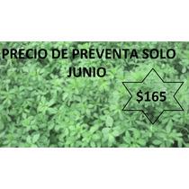 Semilla De Alfalfa Tanhuato La Original