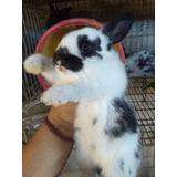 Conejos Varias Razas , En Querétaro