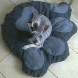 Camas Para Perro En Forma De Huella