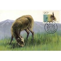 Ch66-china 4 Maximun Postcards T161,sc.2322-25wild Sheep-