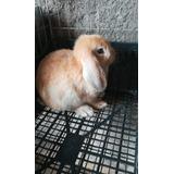 Conejos Belier Y Distintas Razas..
