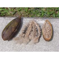 40 Semillas Ceiba