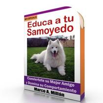 Como Educar A Un Perro Samoyedo - Videos Paso A Paso