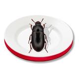 10 Escarabajos De Zophoba Y 10 De Tenebrio
