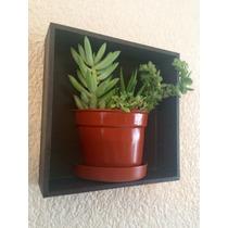 Cuadro Decorativo Con Maceta Partida Con Plantas Naturales