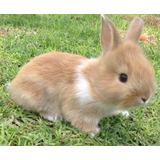 Conejos Hermosos  En Adopción