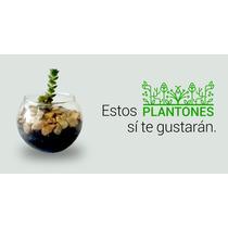 Plantas De Colección Y Planta Suculentas Miniatura