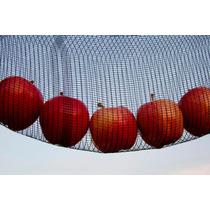 Malla Antigranizo - Antipajaro Rollo De 3.70x100