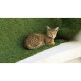 Gatos Savannah