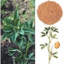 500 Gramos Polvo Semillas Fenogreco Alholva Organicas