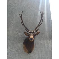 Animales Disecados 100 % Artificiales Ciervo Rojo