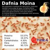 Pulga De Agua, Alimento Vivo Para Peces, Daphnia Moina