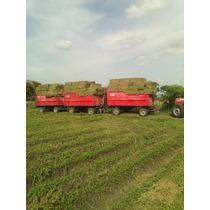 Alfalfa De Primera Calidad Achicalada En Pacas Y Molida