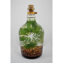 Bio|botellas - Micro Ecosistemas Acuáticos - Regalo - Pecera