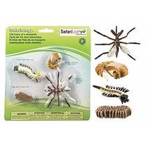 Safari El Ciclo De Vida De Un Mosquito Material Didactico