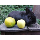Hermoso Conejo Enano