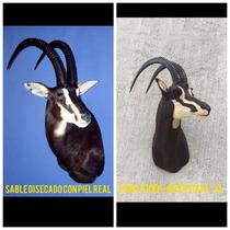 Animales Disecados 100 % Artificiales Antílope Sable