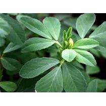 30 Semillas Fenogreco Alholva Medicinal Huerto Planta